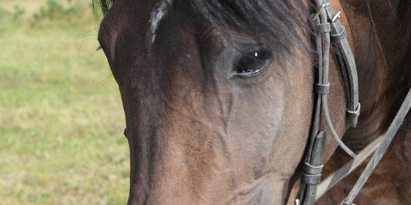 Pferdegestuetzte Therapie