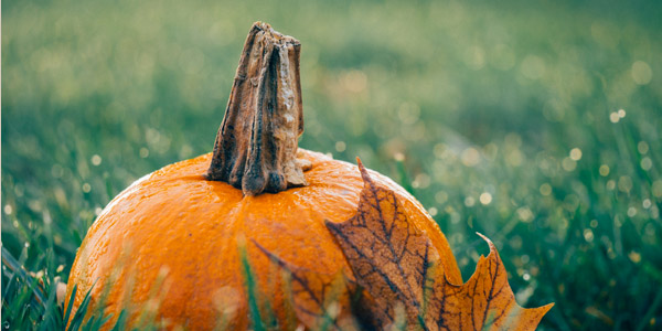Halloween: pumpkin,witches, werewolves and ghosts