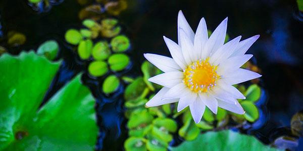Il Giardino Botanico Heller, tra natura e relax